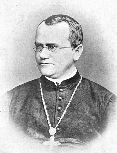 Brno is preparing to celebrate the 200th anniversary of the birth of the genetics pioneer